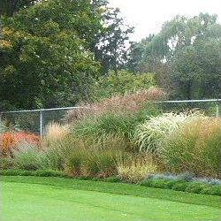 Landscaping toronto landscape design company presents ornamental landscaping toronto landscape design company presents ornamental grass gardens in toronto workwithnaturefo
