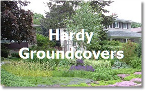 Landcaping Toronto; Groundcovers