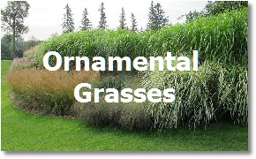 Landcaping Toronto: Ornamental Grasses